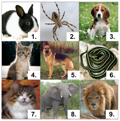 Exercise names of animals in English